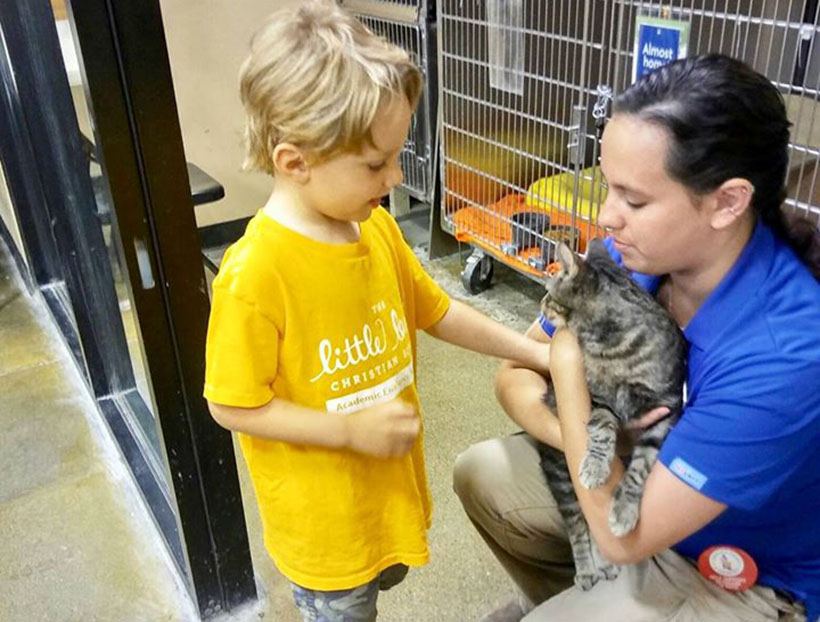 young boy petting cat at a Preschool & Daycare Serving Carmel, Indiana